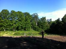 John Barrett, grower extraordinaire, inspecting the garden in early summer 2012.